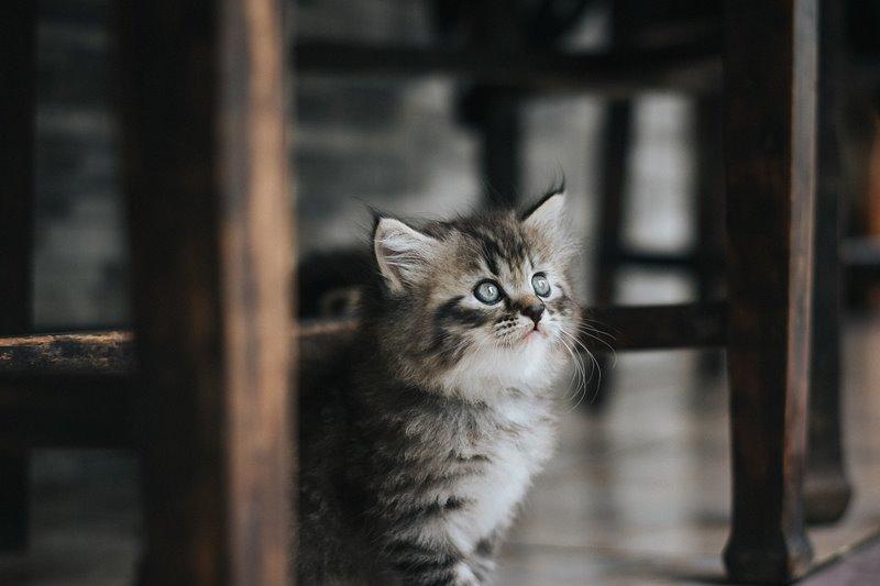 gatos e móveis cuidados