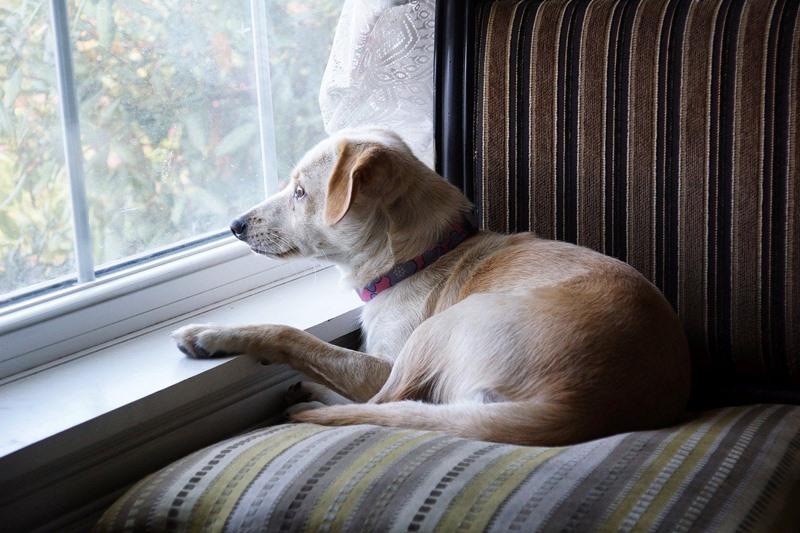 cachorro na janela
