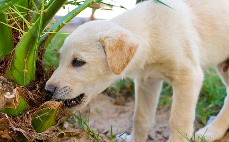 cachorro comendo plantas
