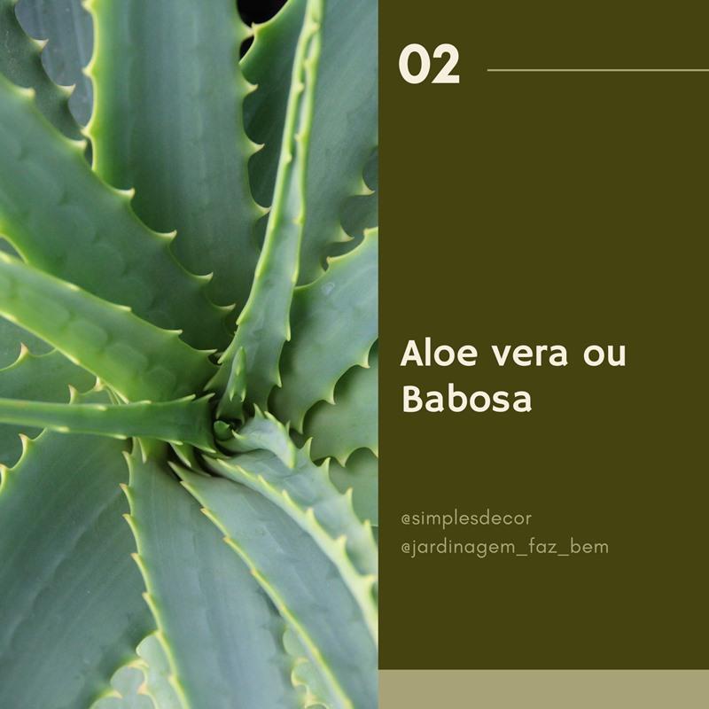 10 plantas difíceis de matar - Aloe vera