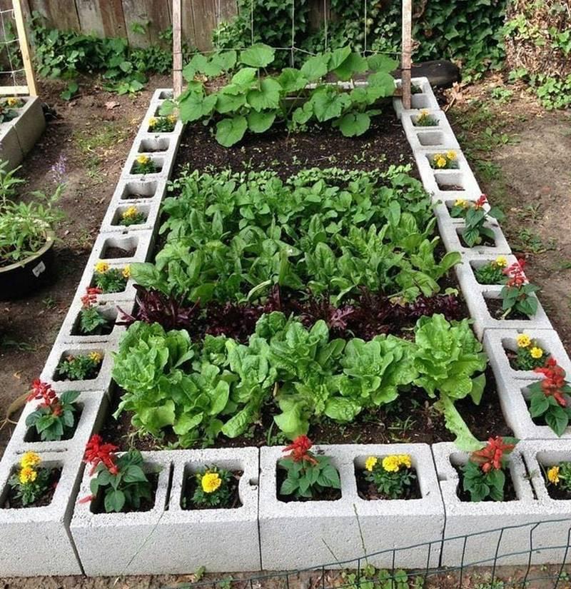 Horta caseira com proteção natural contra pragas