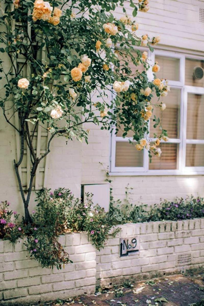 jardins em vasos - pequenos espaços