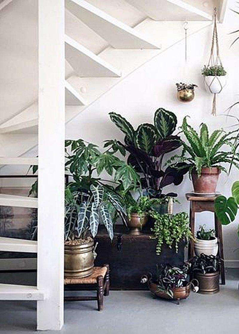 plantas de sombra embaixo da escada