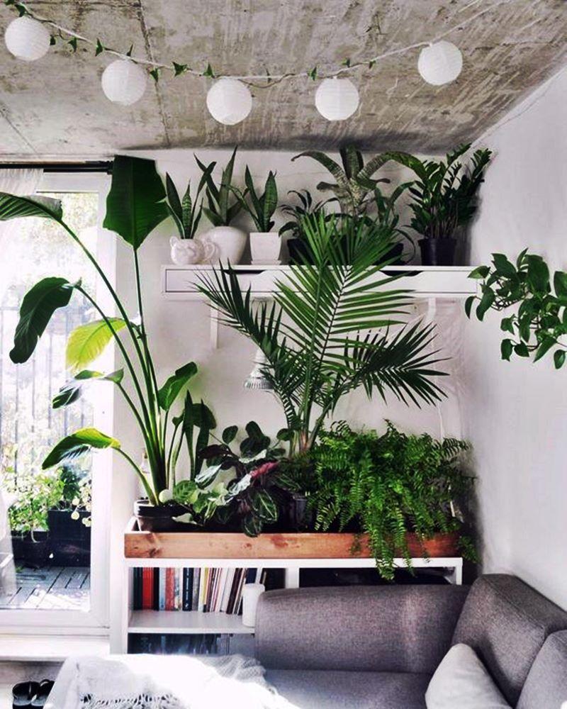 cantinho com livros e plantas