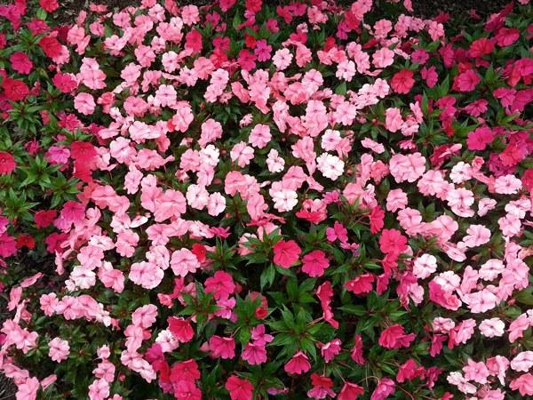 1- Florespexels-photo-226288
