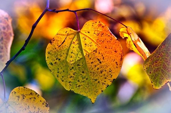 Cuidados no jardim para o Outono