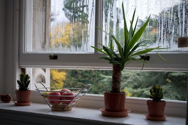 6 formas de evitar umidade na sua casa