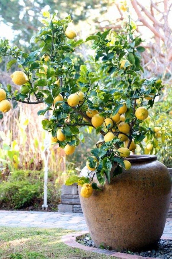 Que tal ter frutas na varanda?