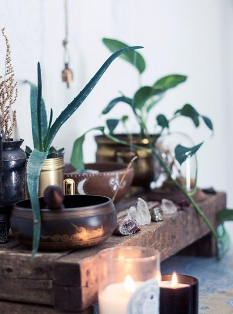 velas e plantas